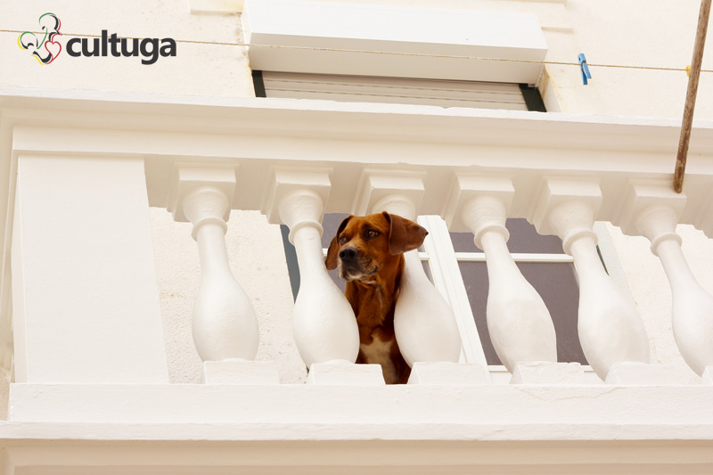 cachorro_nazare_portugal_cultuga_1