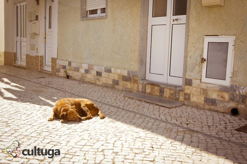 cachorro_nazare_portugal_cultuga_10