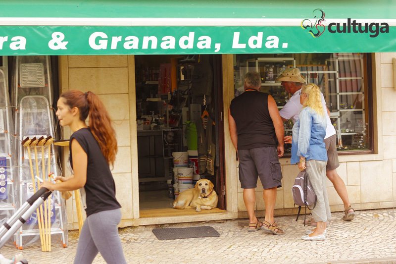 cachorro_nazare_portugal_cultuga_3