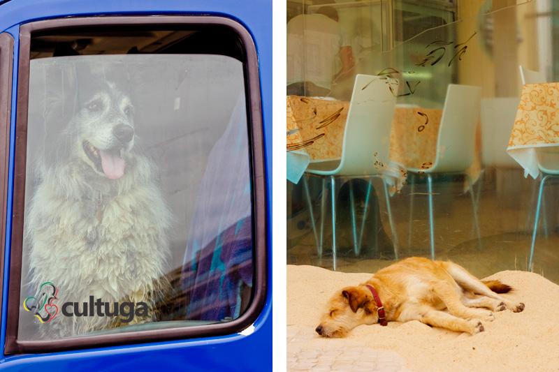 cachorro_nazare_portugal_cultuga_4