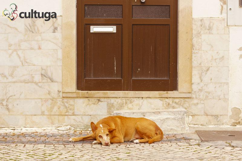 cachorro_nazare_portugal_cultuga_5