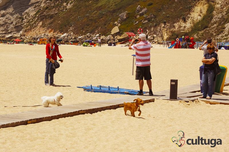 cachorro_nazare_portugal_cultuga_8