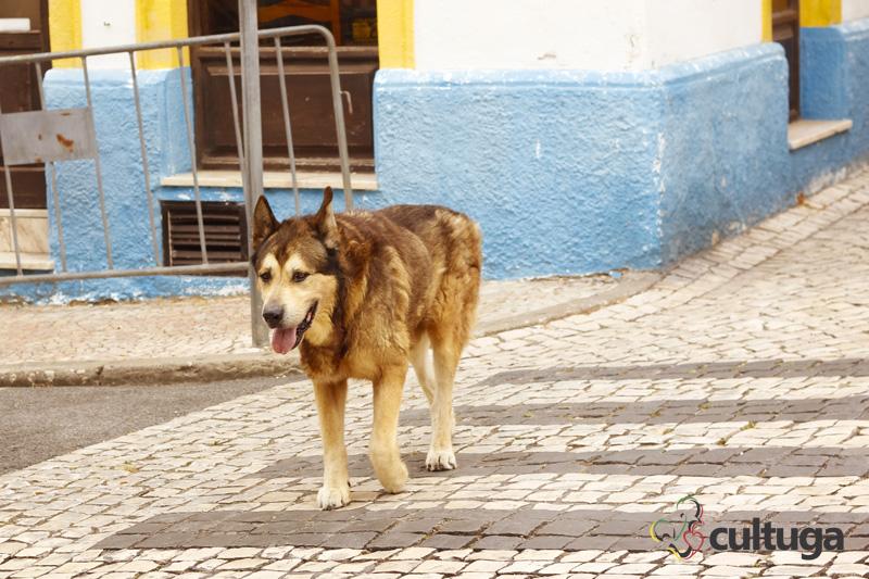 cachorro_nazare_portugal_cultuga_9
