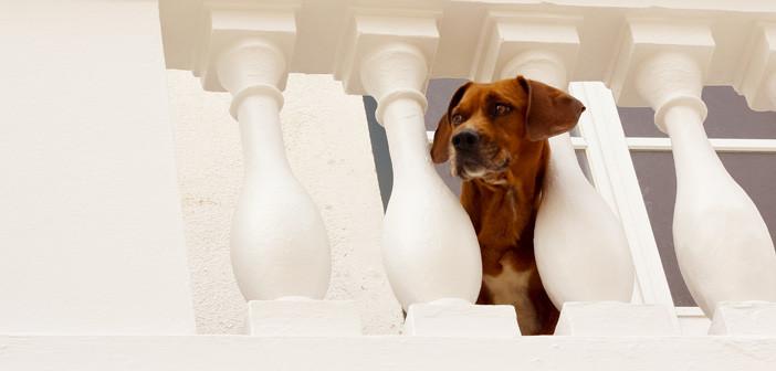 13 cães (e 1 gato) que vão te mostrar como é Nazaré