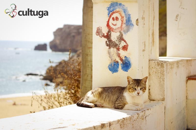 gato_nazare_portugal_cultuga_11