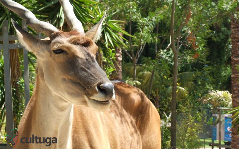zoológico de lisboa portugal