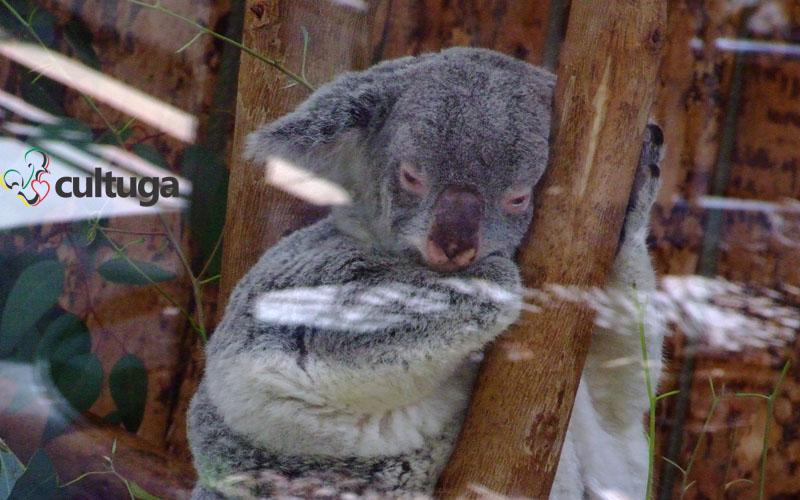 zoológico de lisboa portugal cultuga