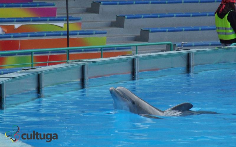 golfinhos zoológico de lisboa portugal