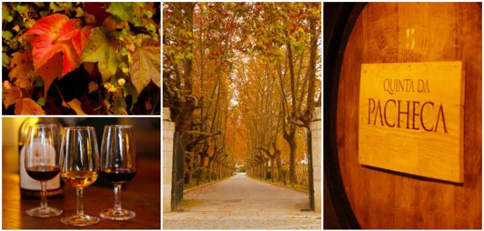 Quinta da Pacheca: uma vinícola de charme no Douro