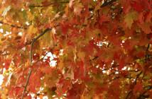 portugal_em_outubro_outono