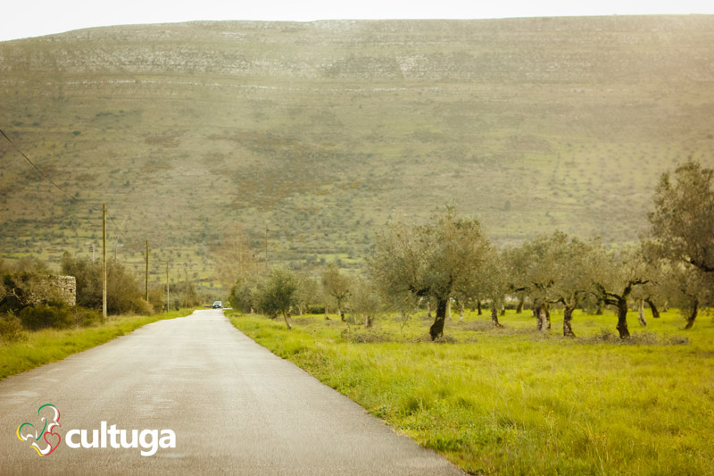 hotel_turismo_rural_centro_de_portugal_oliveiras_cooking_and_nature_emotional