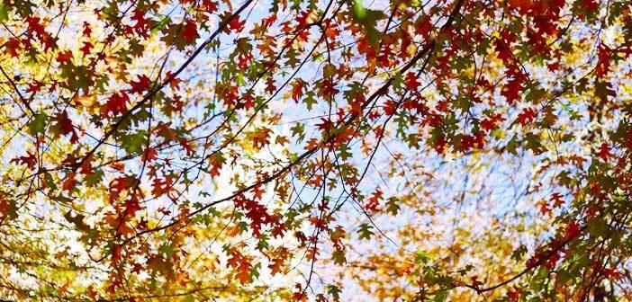 Portugal em outubro: folhas avermelhadas de outono
