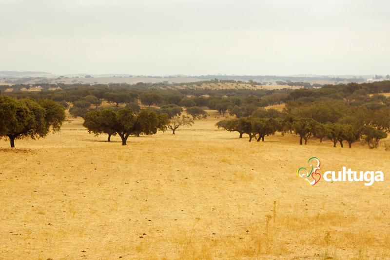 castelo-de-vide-paisagem-alentejana