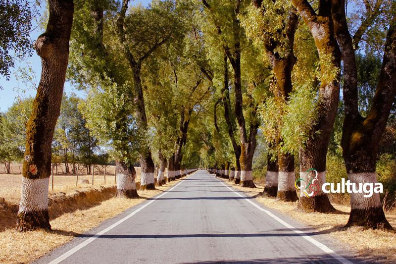 Estradas mais bonitas de Portugal para viajar de carro