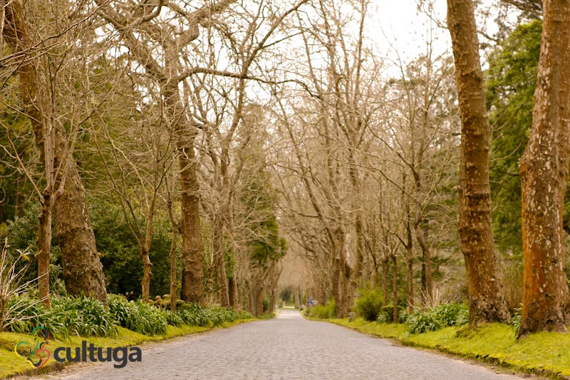 estradas-ilha-de-sao-miguel-acores-cultuga-5