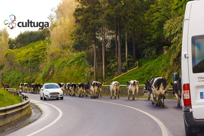 estradas-ilha-de-sao-miguel-acores-vacascultuga-10