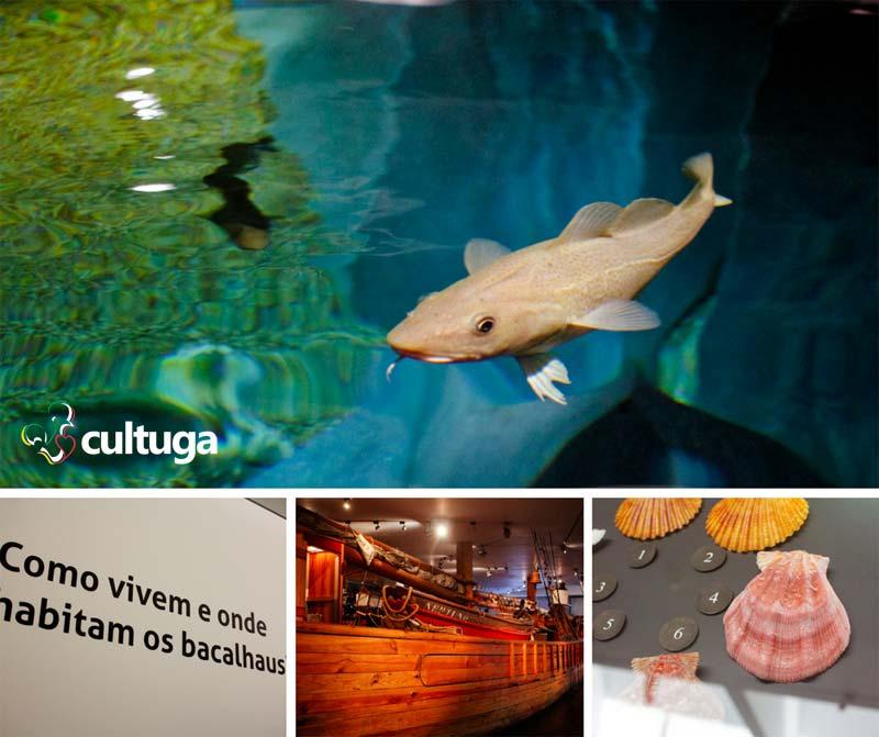 Museu de Ílhavo - Aquário de bacalhau