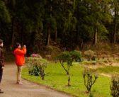 Açores: vale a pena contratar um tour guiado?