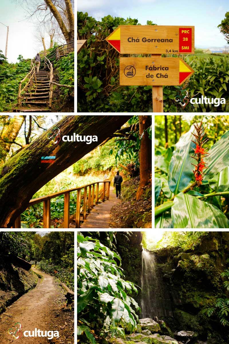 Açores Ilha de São Miguel: Plantação de Chá Gorreana