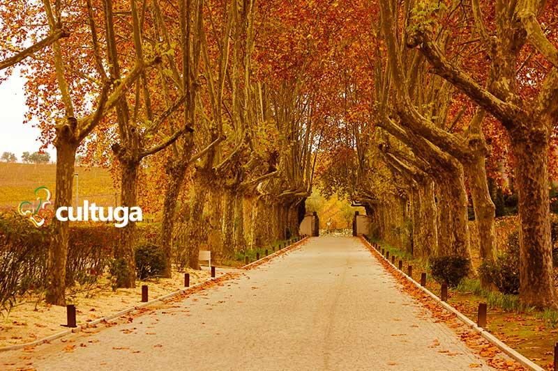 Vinhedos da Quinta da Pacheca, Portugal