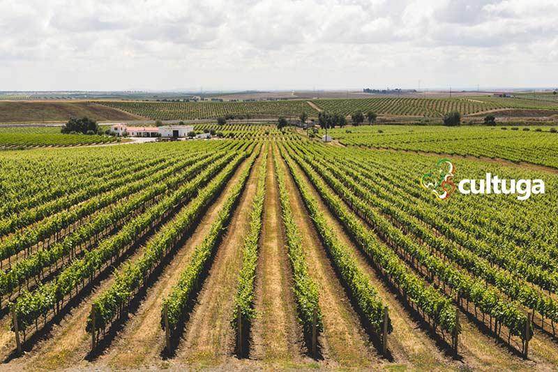 Vinhas da Ribafreixo Wines