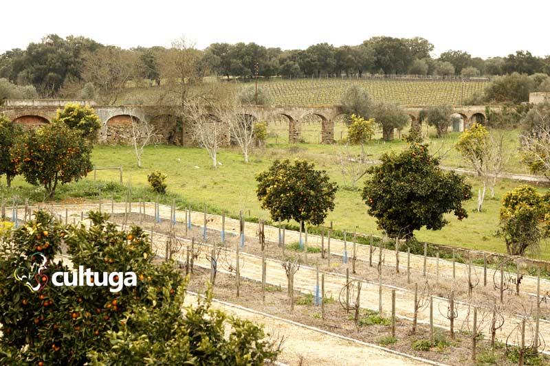 Plantações de uva na Adega Cartuxa, no Alentejo