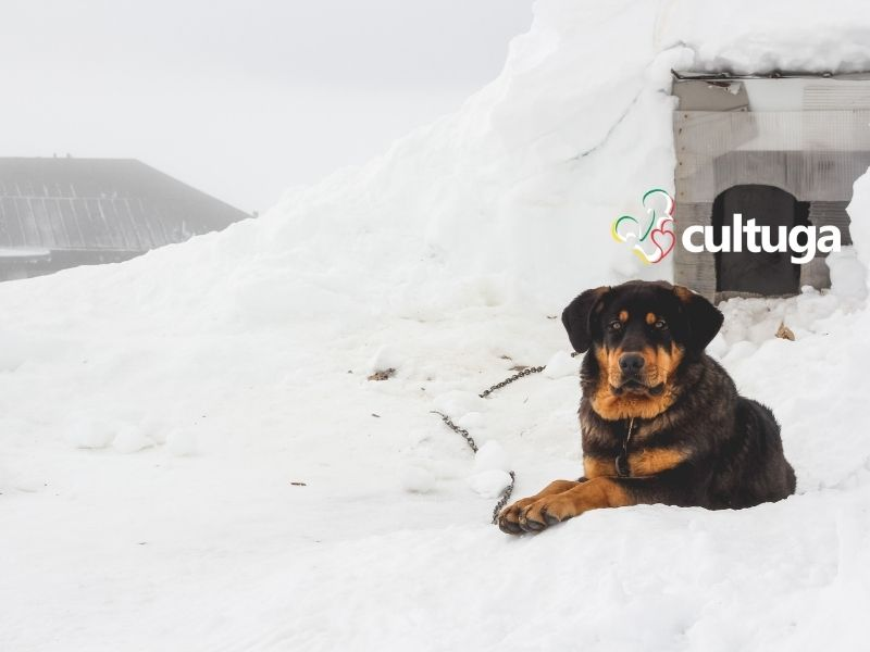 Serra da Estrela: neve